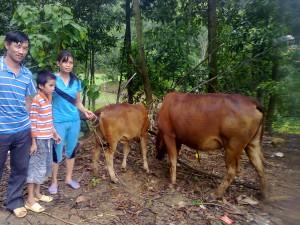 nghia cow